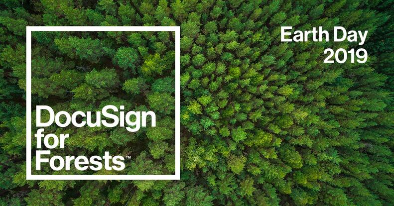 three-ways-you-can-help-save-our-forests-on-earth-day