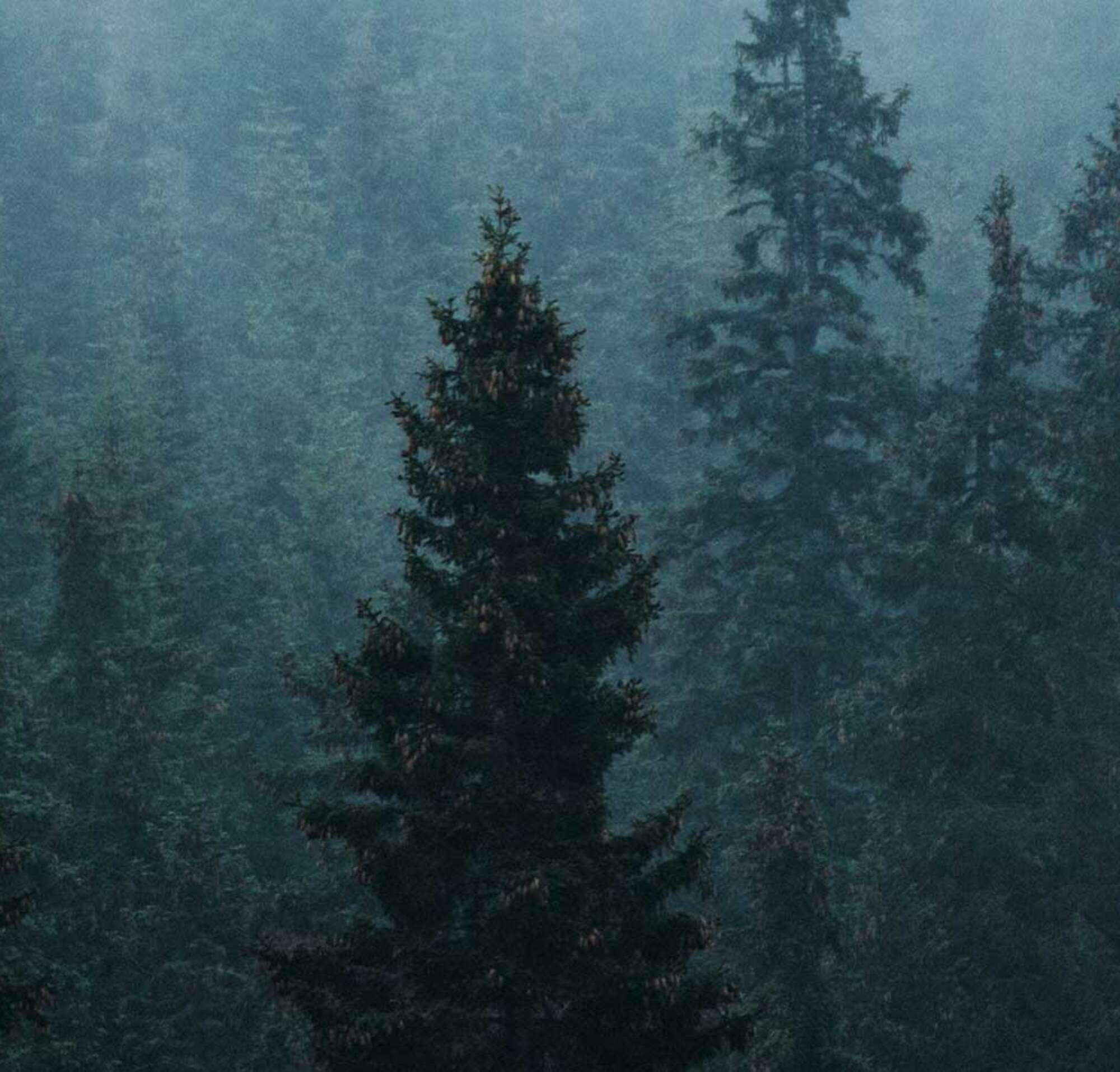 Des arbres dans la forêt