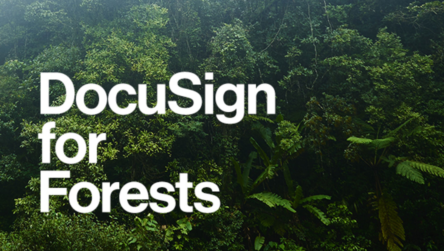 """A picture of trees with the words """"DocuSign for Forests"""" in white on top."""